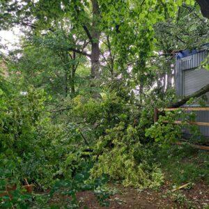 Baum liegt im Garten