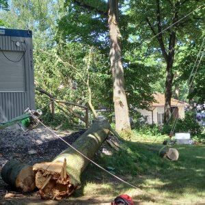 Baum wurde abgesägt