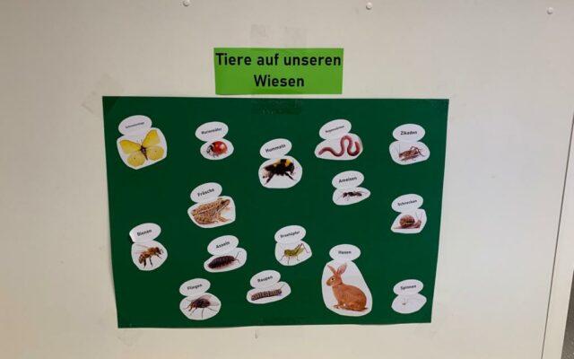 Die Tiere auf der Wiese werden auf einem Plakat dargestellt