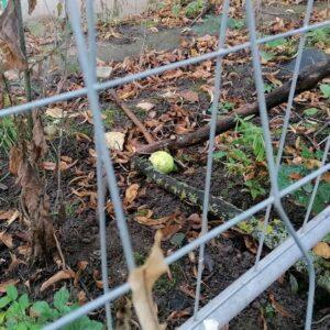"""Aktuelles """"Problemlösefähigkeit"""" - Ein Tennisball wird mit zwei Ästen zu sich bewegt."""