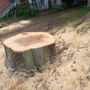 Baumstumpf als Tisch